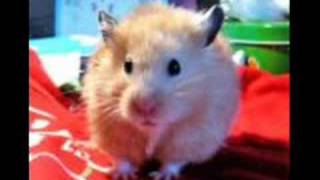 very cute and funny hamsters