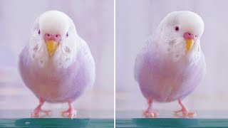 Funny Parrots Videos Compilation cute moment of the animals – Cutest Parrots #46 – Compilation 2021