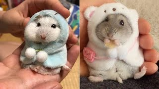 Cute And Funny Hamsters Compilation – Cutest Hamsters 2020