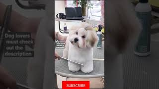 Cute And Funny Dogs 🐶 Videos Compilation -2021 #Shorts