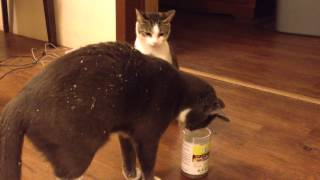 Cats and Catnip – Funny!