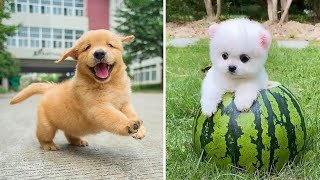 Baby Dogs 🔴 Cute and Funny Dog Videos Compilation #6 | Funny Puppy Videos 2020