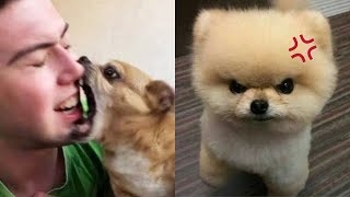 Angry – Funny Dogs And Cats of TikTok 😮 – angry Pet videos 😱