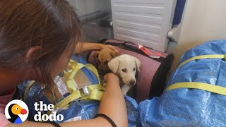 2 Puppies Found On Side Of Road Reunite Months Later | The Dodo Faith = Restored