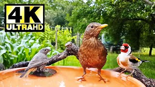 Complete Relaxation in 30 Minutes | Cute Birds at the Birdbath | Videos for Cats and Dogs