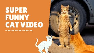 Super Funny Cats – Cat Reaction – Cute Kitten Videos – Cat Compilation – Cats Video | Just Like Cat