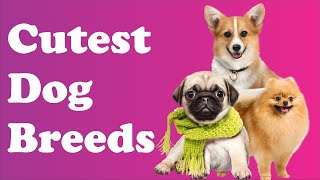 Cutest Dog Breeds – Cute Dogs – Pets & Animals