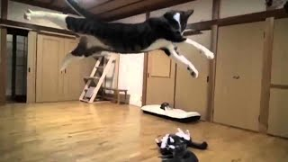 Cute Cats and Funny Animals Complilaton 😹 Try Not To Laugh Challenge – Cute Cat 006