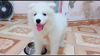 Cute puppies is chained so naughty | Best funny dog videos