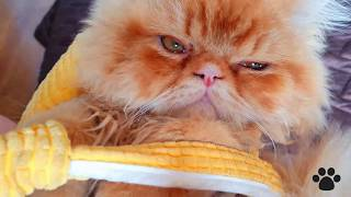 Cute Baby Garfield found new place | Cute cats
