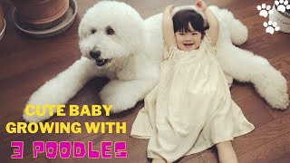 Poodle Dog Playing With Baby – Cute Dogs and Babies are Best Friends – Dogs Babysitting Babies Video