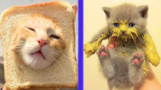 BEST CAT MEMES COMPILATION OF 2020 PART 37 (FUNNY CATS)