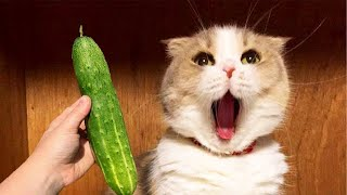 👍 Best Funny Cats 😹 And Dogs 🐶 Of The Month  Try Not To Laugh Challenge 2021