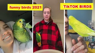 Cute Birds Compilation 18 and Funny Parrots 2021