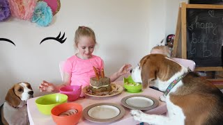 Cute Dogs Reaction For a Cake and an Awesome Toy For Birthday