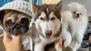 OMG So Cutie, lovely and Funny Dogs Actions