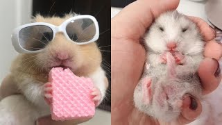 Funny Hamsters And Funny Dog Videos Compilation – Cute and Funny moments of the animals💗1