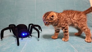 Cat vs Spider – My kitten fights in a 3 levels game