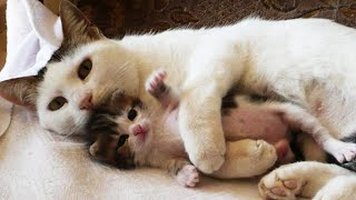 OMG So Cute Cats ♥ Best Funny Cat Videos 2021 #71