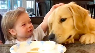 Silly Dogs to Make You Smile   Funny Pet Videos