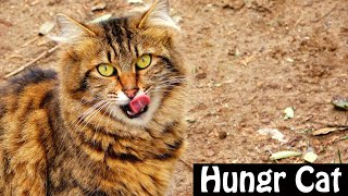 HUNGRY CATS IN THE PARK (Cute Cats)