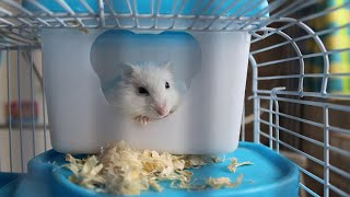 Funny and Cute Hamsters – Funny Hamster Videos Compilation 2021| PK Pets and Animals