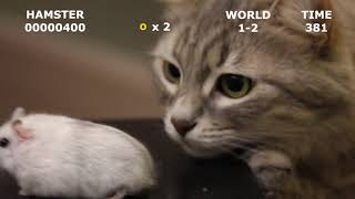 Funny HAMSTERS 🐹 and CAT 🐈 in the video game 🎮   Super Hamster Brothers 😁   CAT 🐈 chasing HAMSTER 🐹