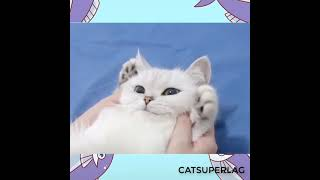 Best Cute Cats and Funny Cats Videos for 2021