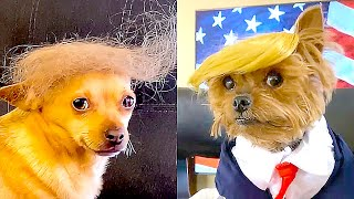These DOGS look like DONALD TRUMP 🐶👉👨  And More!! | ✨ SUPER CUTE ANIMALS TIKTOK COMPILATION #4