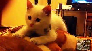 Cute Cats and Funny Animals Compilaton 😹 Try Not To Laugh Challenge – Cute Cat 034