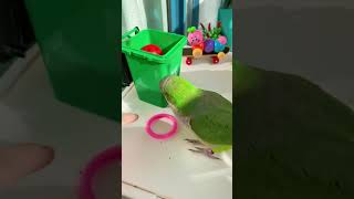 WOW Amazing Parrot Video ! Cute cleaver and lovely parrot #parrot #cuteparrot #short71
