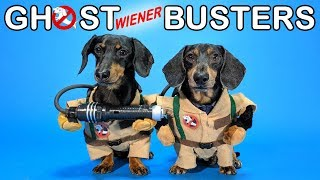 Ep #4: GHOSTWIENERBUSTERS – (Funny, & Spooky Dog Video for Halloween!)