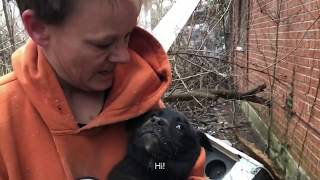 Crawling UNDER a house to save 3 little fluffy puppies – Stray Rescue of St.Louis