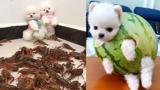 Funny and Cute Dog  😍🐶| Funny Puppy Videos #1