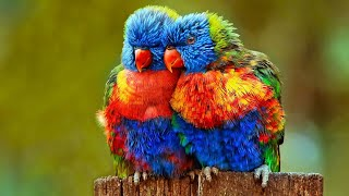 CUTE BIRDS VIDEO COMPILATION CUTE MOMENT OF THE ANIMALS