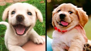 Cute baby animals Videos Compilation cutest moment of the animals – Cutest Puppies! #1