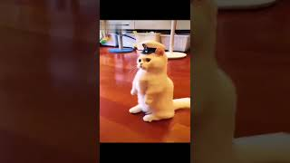FUNNY CUTE KITTENS !!!! CUTE CATS… TRY NOT TO LAUGH..😺😸 SUBSCRIBE FOR MORE 👇