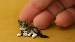 OMG So Cute Cats ♥ Best Funny Cat Videos 2021 #66