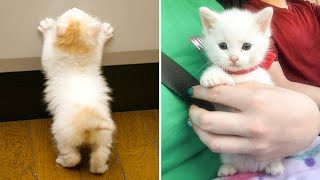 Cute Kittens Doing Funny Things 2021 🐱 #28 Cutest Cats 🐱