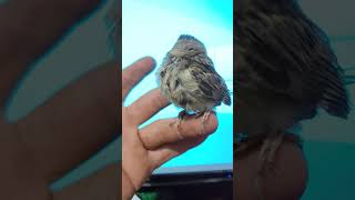 funny. Birds are awesome funny videos maroc