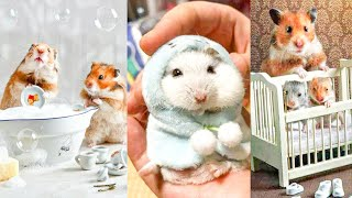 Cute Baby Animal Videos Compilation Of Cutest Hamsters 2020 #animals #funny #hamsters #cute #baby