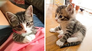 Cute Kittens Doing Funny Things 2021 🐱 #29 Cutest Cats 🐱