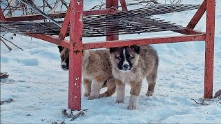 Sad Unwanted Puppies Went out to the Road only to See what Happens!!!