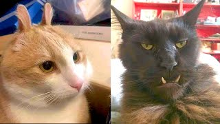 BEST CAT MEMES COMPILATION OF 2020 – 2021 PART 49 (FUNNY CATS)