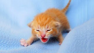 CUTE Cats oh Wow ♥ The Best Funny Cat Videos 2021 ♥ Try To Not Laugh V2