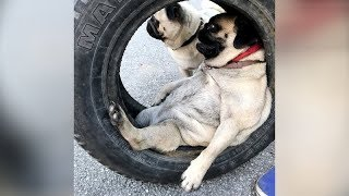 FUNNY DOGS that will MAKE YOUR STOMACH HURT from LAUGHING // Funny DOG compilation