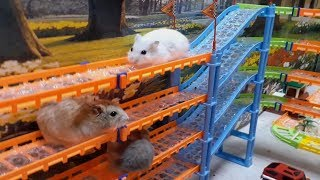 Three Cute Hamsters Playing Amusement park – Happy Holidays