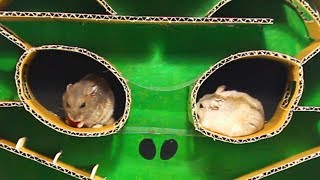 Three Cute Hamsters Running In Alien Mask Maze- Who Will Win In This Game?