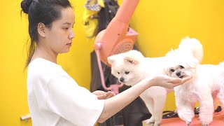 Cute dogs and puppies doing funny things | Dog video 2021