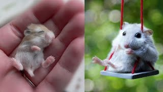 Aww😁 Funny and Cute Hamster Videos Compilation🐹 – Baby hamster #7